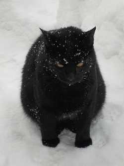 I hate snow... by Katozo