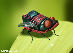 SHOE FLY by CharlyChive